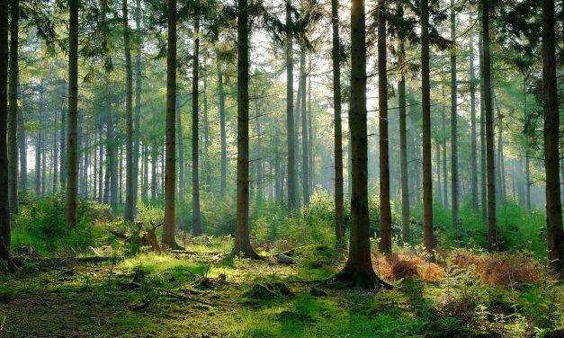 درخت زمین کا حسن ہیں
