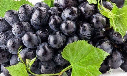 سیاہ انگور کے فائدے