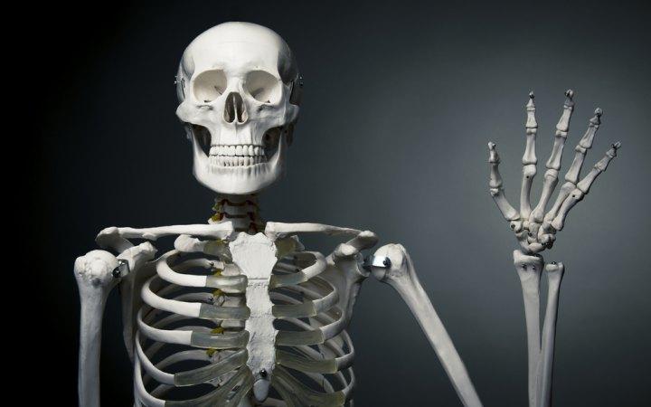 ہمارے جسم کی سب سے بڑی اور سب سے چھوٹی ہڈی کون کون سی ہے؟