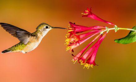 دنیا کے سب سے چھوٹے پرندے بارے پڑھئے عجیب و غریب تحقیق