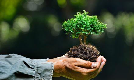 ماحول کا توازن