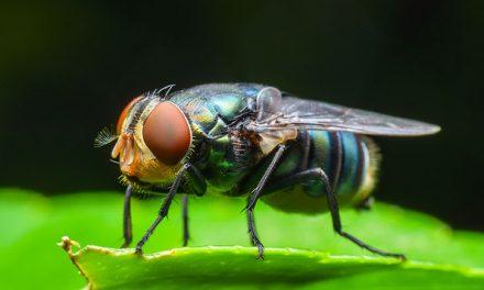 مکھیوں کی بھنبھناہٹ سے پریشان ہیں، تو یہ ٹوٹکا ضرور آزمائیں