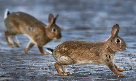 خرگوش بارے بڑھئے ایک عجیب و غریب تحقیق