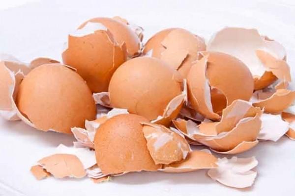 انڈوں کے چھلکے بہترین کھاد ہیں