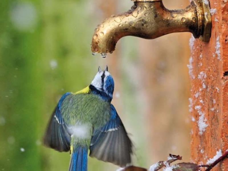 پانی بچائیں