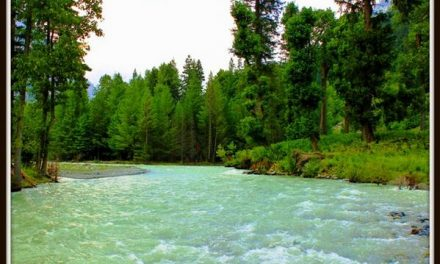 کلکوٹ دیر کوہستان، جنگلات کی رائلٹی میں خورد برد کا مسئلہ