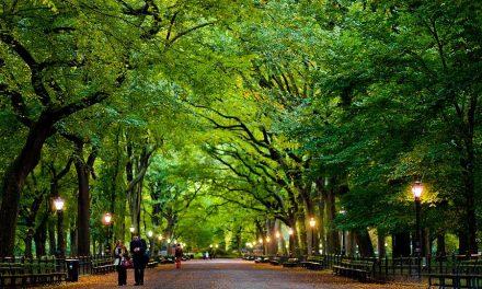 دو لاکھ پچیس ہزار درختوں پر مشتمل یہ پارک کہاں واقع ہے؟