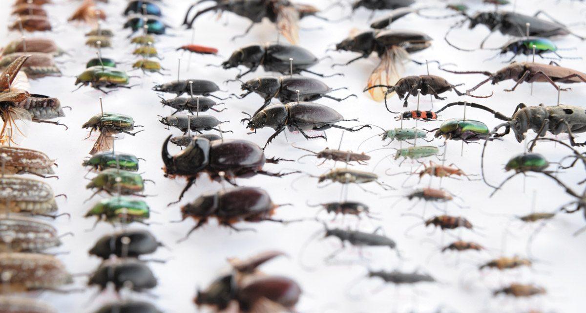اب تک حشرات کی کتنی قسمیں دریافت کی جاچکی ہیں؟