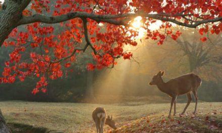 چڑھتے سورج کی سرزمین، دید و شنید (بیسواں حصہ)