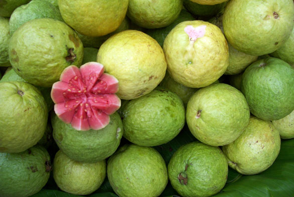 بلغمی کھانسی میں بُھنا ہوا امرود فائدہ مند ہے، تحقیق