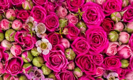 پھولوں کی خوشبو میں کمی کی وجہ گلوبل وارمنگ ہے، تحقیق