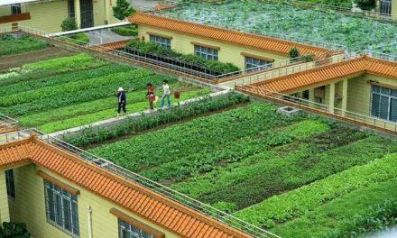 چھتوں پر باغبانی