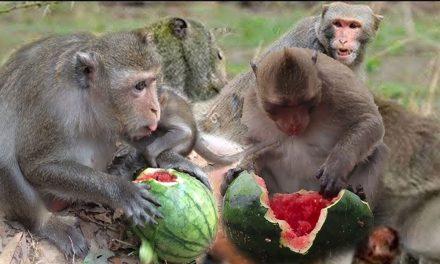 بندر کے حوالہ سے عجیب و غریب تحقیق