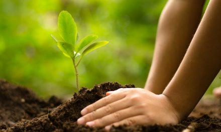 ماحول کا بچاؤ اِک چیلنج