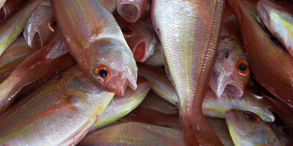 مچھلی کی بدبُو دور کرنے کا ٹوٹکا