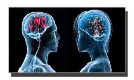 دماغ کے سائز بڑھنے کا عمل کب رُکتا ہے؟