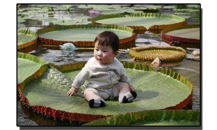 یہ ہے دنیا کا سب سے بڑا آبی پودا