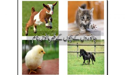 جانوروں کے بچّوں کے غیرمانوس نام