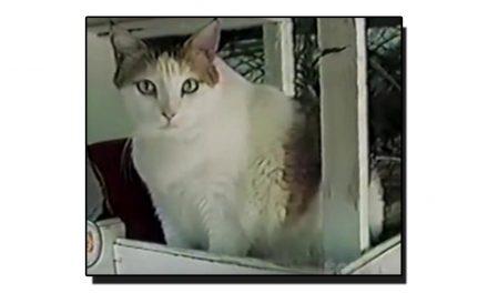 دنیا کی سب سے زیادہ عمر پانے والی بلی