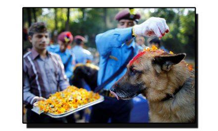اہلِ نیپال کا اپنے پالتو کُتّوں سے عجیب و غریب برتاؤ