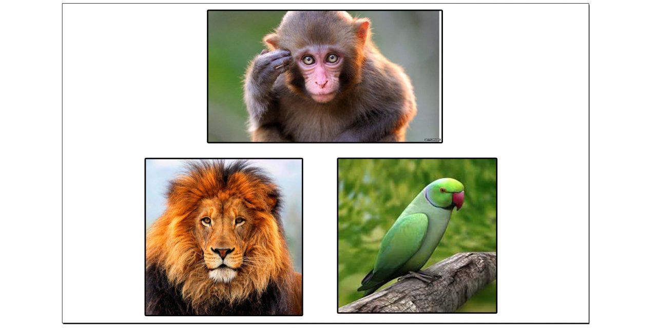 جانوروں کی صوت کے لیے مستعمل علیحدہ الفاظ