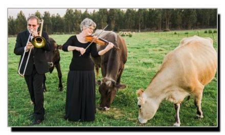 موسیقی سننے والی گائے زیادہ دودھ دیتی ہے، تحقیق
