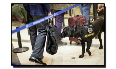 بارودی مواد سونگھنے والے کتے کیوں نہیں بھونکتے؟