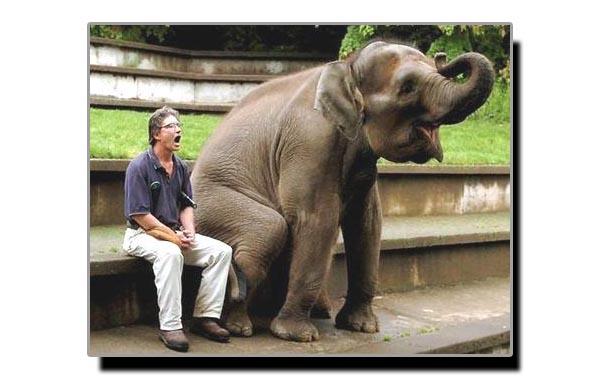 ہاتھی کا دماغ انسان کو دیکھ کر کس طرح رد عمل کرتا ہے؟