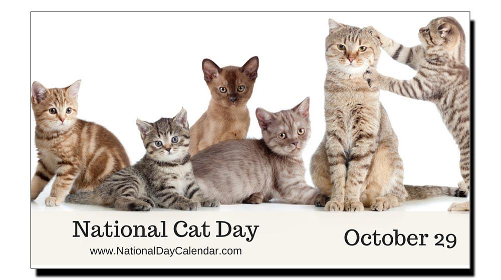 اُنتیس اکتوبر، امریکہ میں بلیوں کا قومی دن