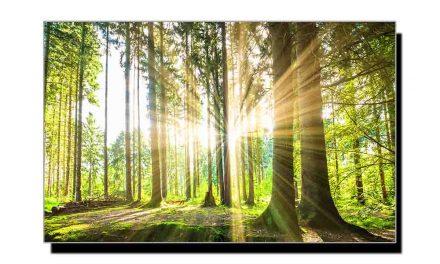 درختوں بارے حیرت انگیز اعداد و شمار پر مشتمل تحقیق