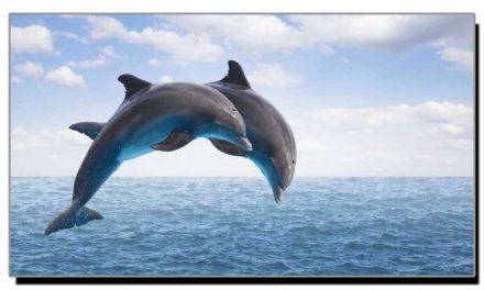 ڈالفن مچھلی اپنی پوری زندگی پانی کیوں نہیں پیتی؟