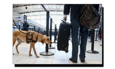 بم سونگھنے والے کتے بم سونگھ کر کیا حرکت کرتے ہیں؟
