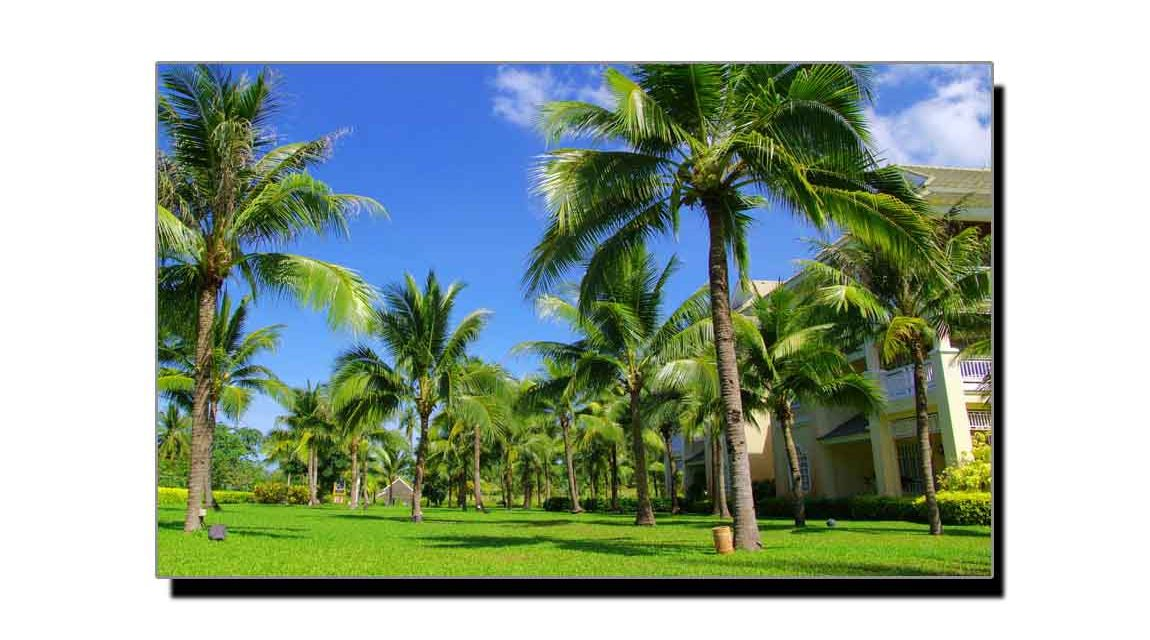 ناریل کا درخت، شارک سے زیادہ خطرناک