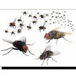 مکھیوں سے نجات پانے کا گھریلو ٹوٹکا