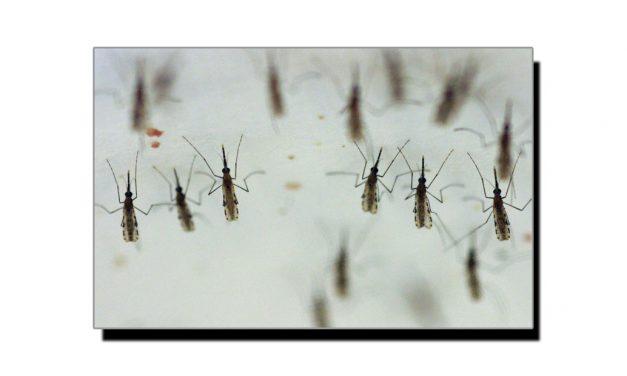 مچھروں کو بھگانے کا گھریلو ٹوٹکا