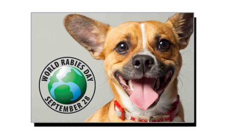 28 ستمبر، عالمی یومِ سگ گزیدگی