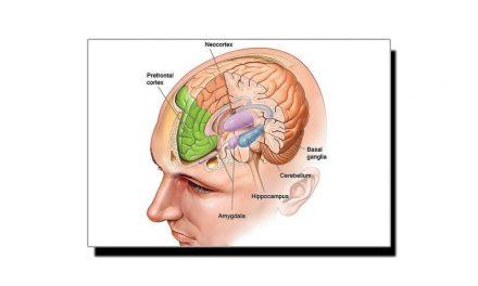 """جانیے انسانی دماغ کے عجیب حصہ """"Amygdala"""" بارے کچھ خاص"""