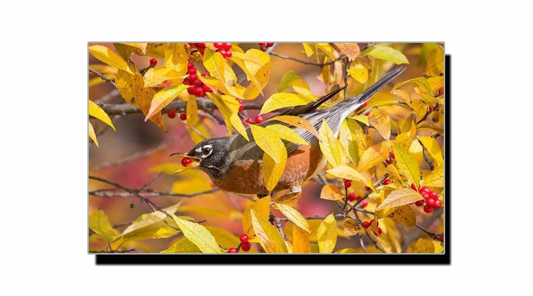 درخت اور پرندے