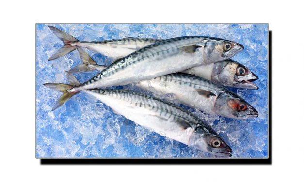تازہ مچھلی پہچاننے کا آسان ٹوٹکا