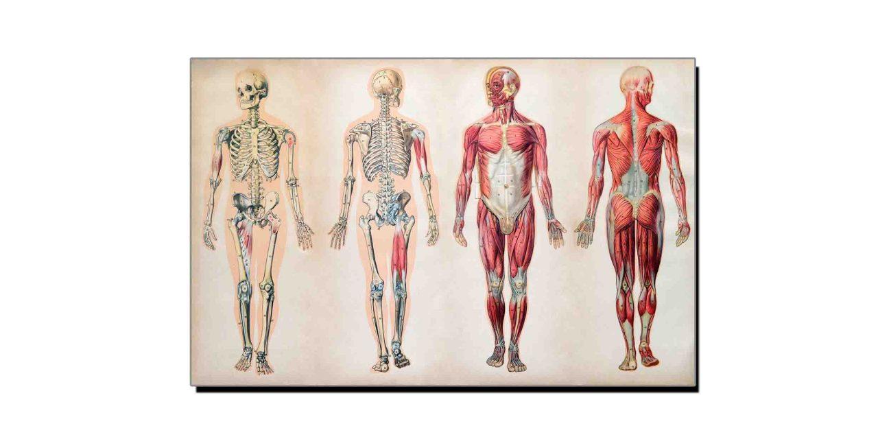 جانتے ہیں انسانی جسم کتنا طاقتور ہے؟