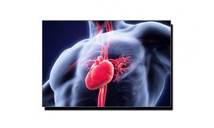 دل، دنیا کا طاقتور ترین پمپ