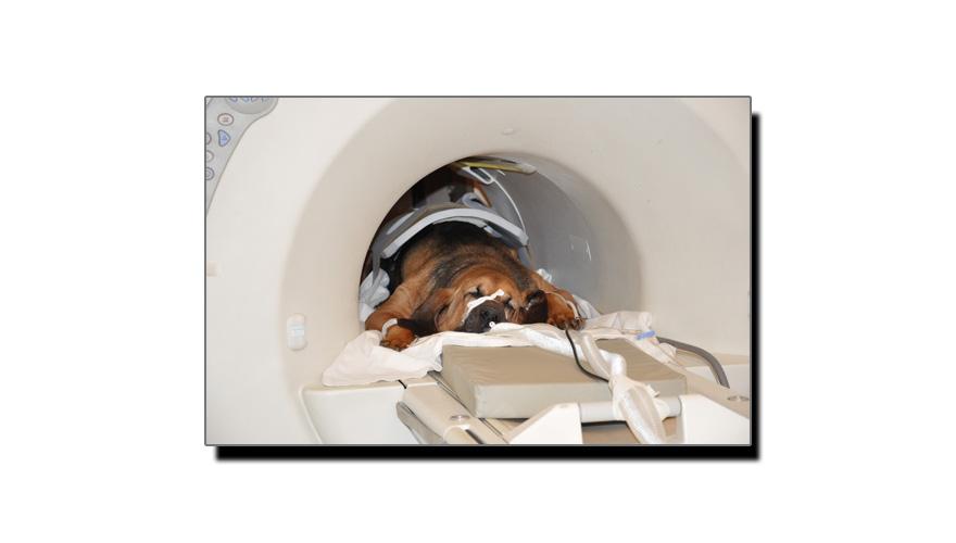 کتے کے دماغ کا عجیب و غریب حقائق سے بھرا ایم آر آئی سکین