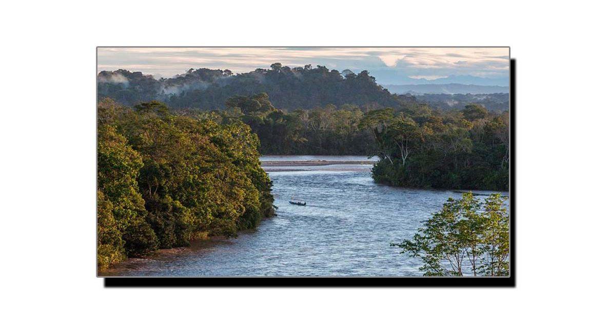 ایمیزون، دنیا کا سب سے بڑا جنگل