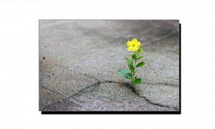 امید کی ایجاد