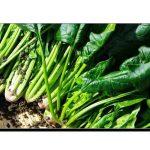 پالک، مدافعتی نظام کو مضبوط بنانے والی سبزی
