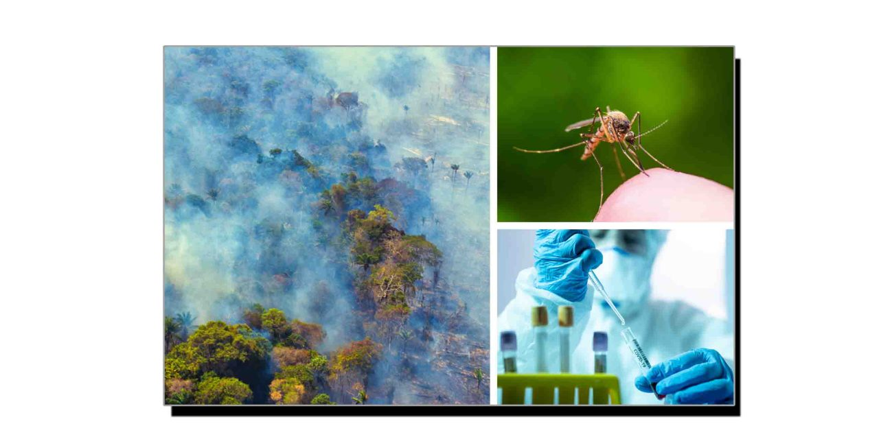 بیماریاں اور وبائیں ارتقائی عمل کا حصہ ہیں
