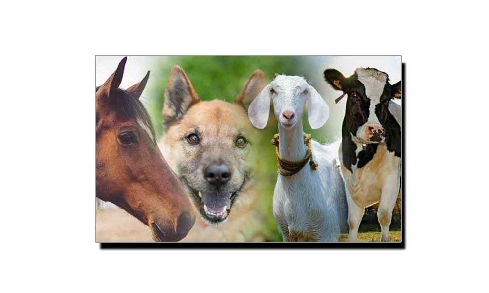 جانتے ہیں جانوروں کے خون کے کتنے گروپ ہیں؟