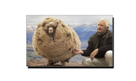 جاننا چاہیں گے اس بھیڑ کی یہ عجیب و غریب حالت کیوں ہوئی؟