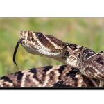 سانپوں سے نجات حاصل کرنے کا ٹوٹکا