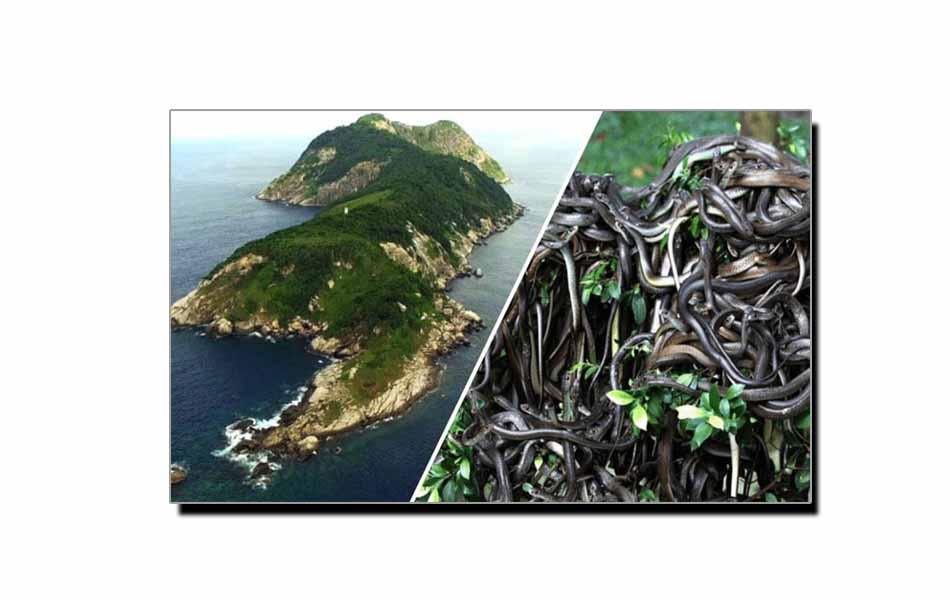 وہ جزیرہ جہاں انسانوں کا داخلہ ممنوع ہے
